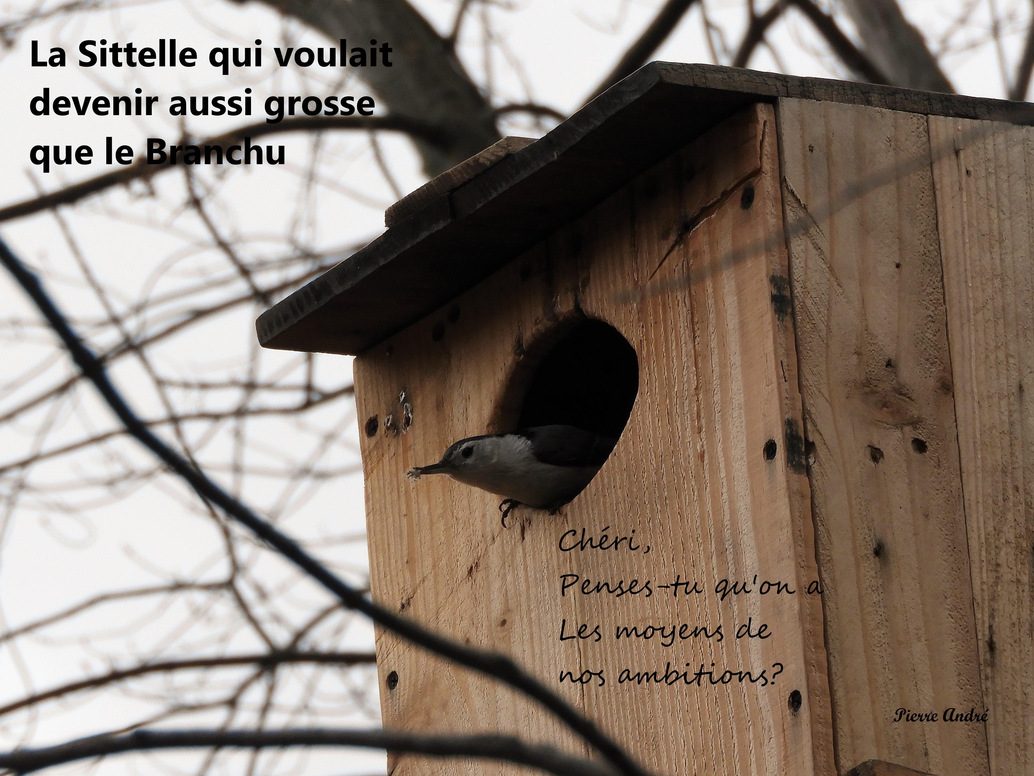Motsdoiseaux3