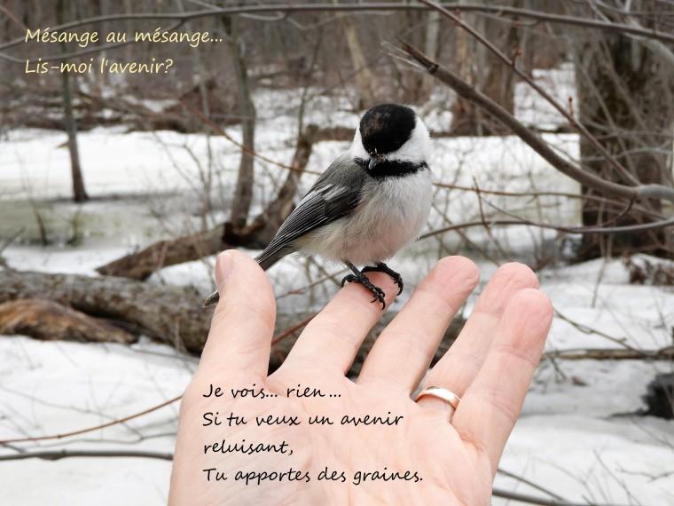 Motsdoiseaux4